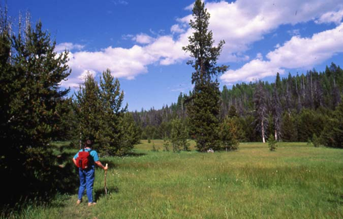 A hiker with a red backpack, standing along the edge of a large forest meadow, under a blue sky with puffy white clouds.