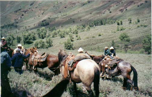 Several brown and gray horses standing in the base of an open valley, with a small group of people nearby.