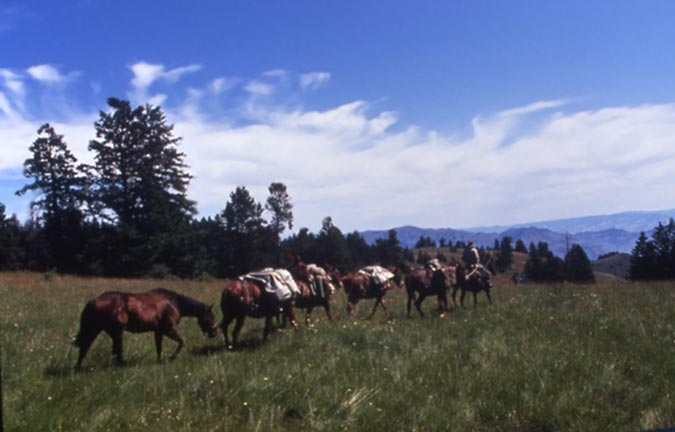 A small string of brown pack-horses being led through an open meadow, wispy white clouds spread across the blue sky above.