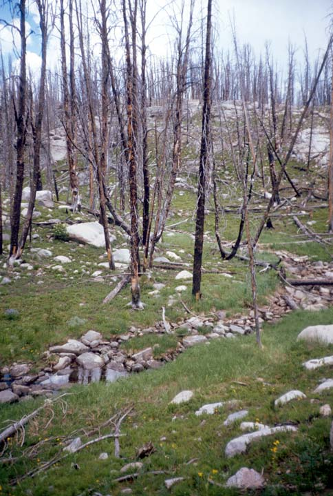 A small stream flowing down through a grassy green slope dotted with white rocks, and a open stand of burned trees.
