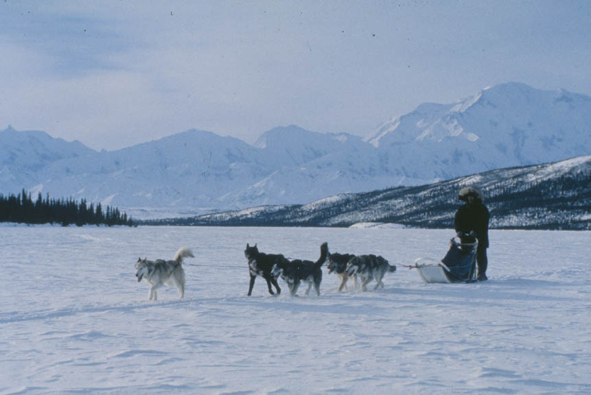 A small team of dogs pulling a man on a sled through an open valley, with massive snowcapped mountains rising in the background.