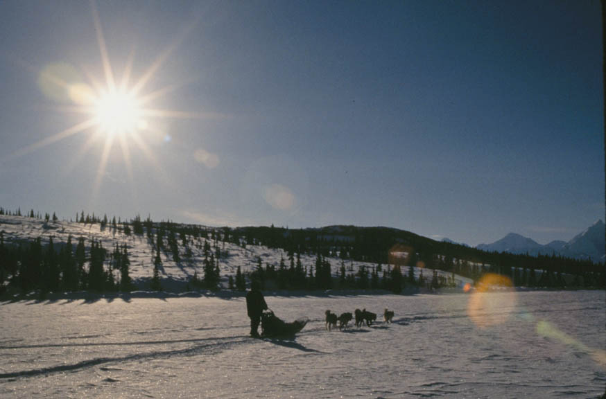 A person on a sled pulled by a small team of dogs crossing a frozen landscape of snow and ice, beneath a bright sun on an empty sky.