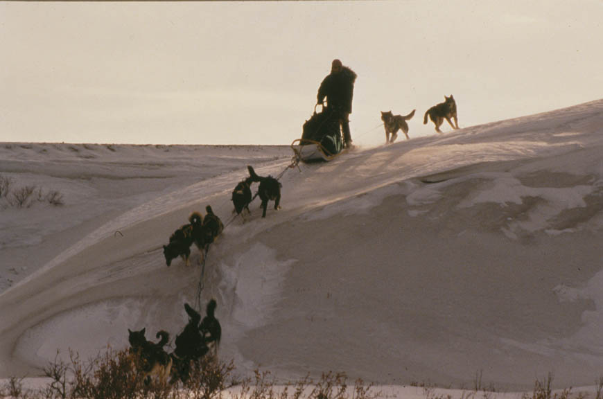 A person on a sled guiding a team of dogs down the edge of a steep snow covered embankment.
