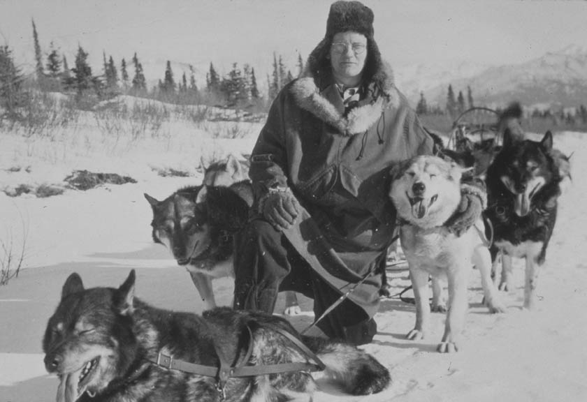 A vintage black and white photograph of a man in a parka, kneeling with a team of dogs.