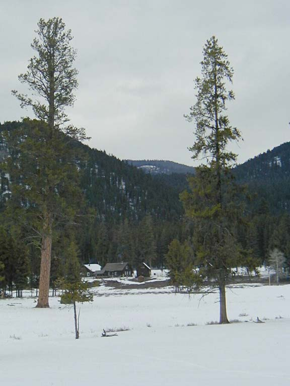 Two tall pine tree standing in a large opening covered in white snow. A small cluster of brown buildings can be seen in the distance surrounded by trees, at the base a small hill.