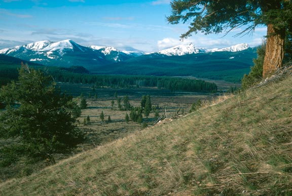 An open grassy slope, overlooking a grassy valley below dotted with evergreen trees. Snowcapped peaks rise in the distance, above forested hills.