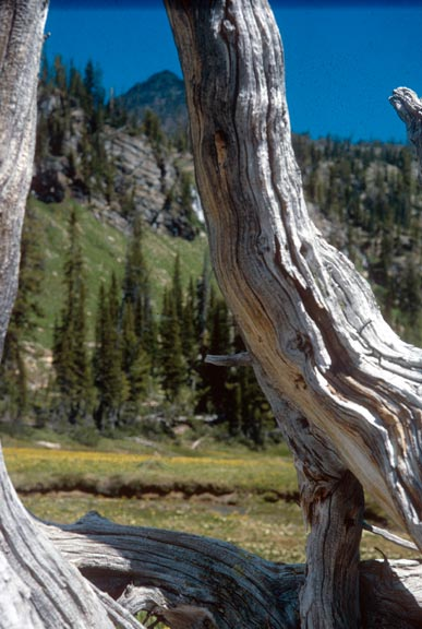 Looking through a weathered tree stump, to an open meadow and forested slope beyond.