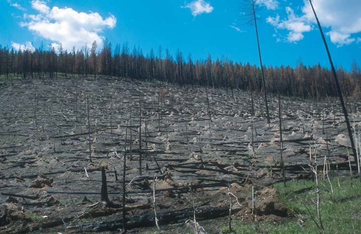 An open slope of burned forest scoured by wind to drifts of gray soil.