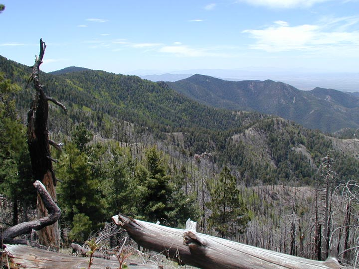 An expanse of partially dead forest, looking from weathered fallen trunks in the foreground, to distant forested hills.