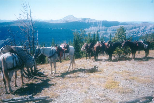 A string of pack horses standing above a high bluff, overlooking a massive valley.