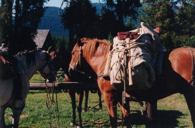 Three pack horses standing at a hitching post, a cabin visible in the background through the trees.