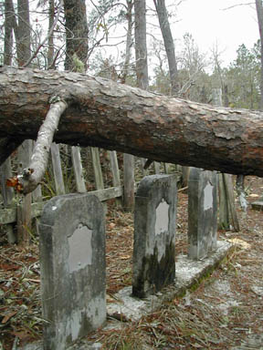A close-up of a large fallen tree, hanging close to three weathered headstones in a historic cemetery.