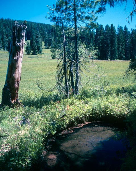 A small sinkhole filled with water, along the edge of a large green meadow, surrounded by forest.