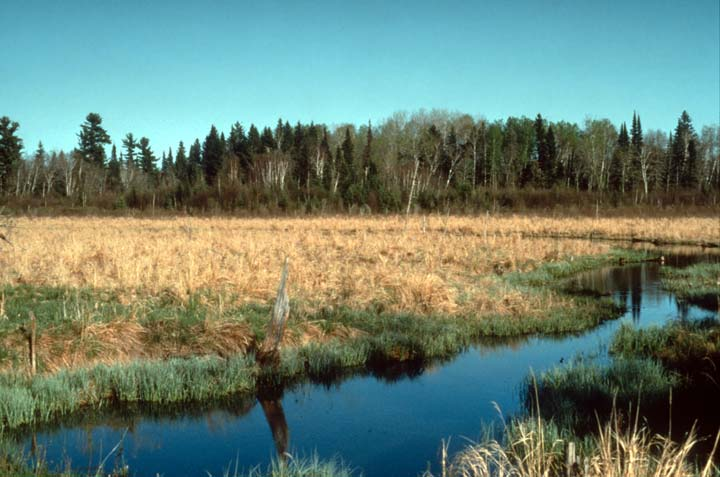 A small channel of water in the middle of a large golden marsh, bordered by forest trees in the distance.