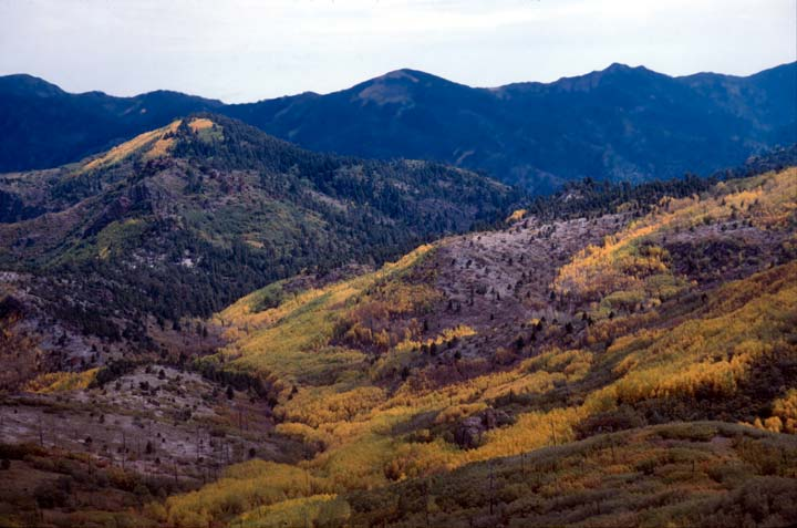 Low mountains in the distance rise above a large forest drainage valley, decorated in bright yellow autumn foliage.