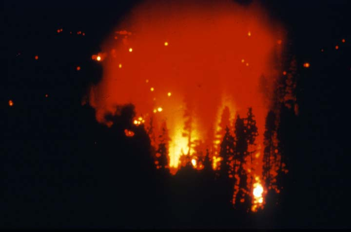 A night image of a black forest, glowing with the orange light of a forest fire.