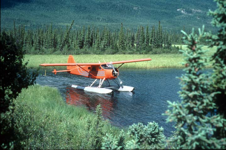 An orange float plane taxiing along the green marshy grass of a small pond, surrounded by small trees.