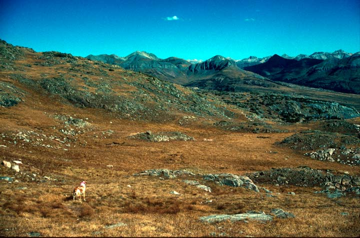 A brown dog standing in an open alpine landscape, brown grass with rock outcroppings stretching away to sharp mountain peaks along the horizon.
