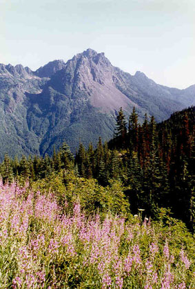 Bright pink Fireweed blooms in the foreground with jagged peaks in the background.