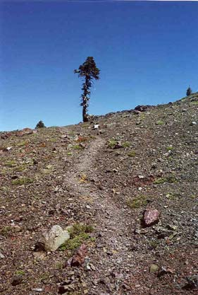 A faint path winds upward across the rocky terrain towards a lone scraggly tree standing out along the horizon, on a background of empty blue sky.