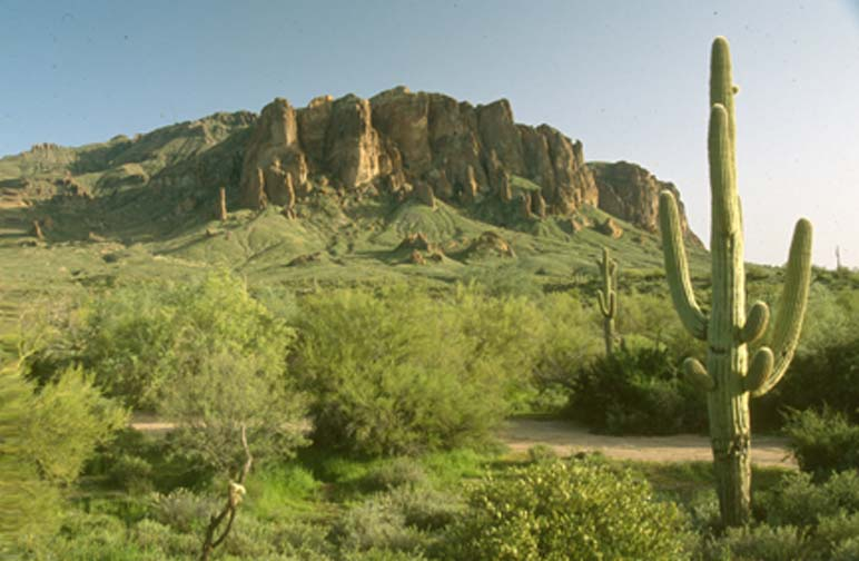 A lone cactus surrounded by green desert foliage, high rocky outcroppings rise in the background.