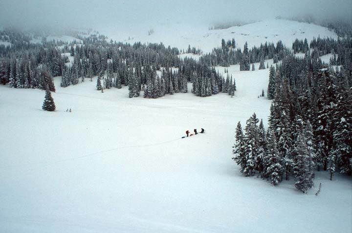 Three skiers in the distance, travel through a winter scene of open snow-covered meadows surrounded by tall forest trees.