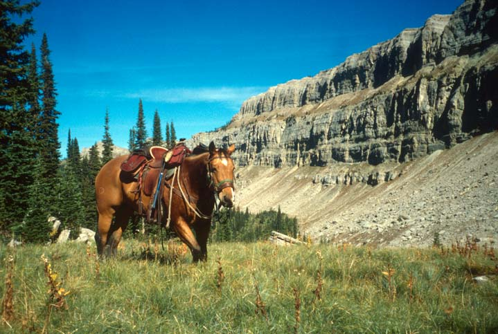 A lone saddled horse standing in tall green grass at the edge of the forest, along the base of a massive cliff wall in the background.