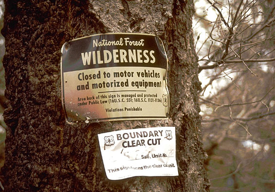 A small black and white wilderness boundry sign, tacked to the trunk of a large spruce tree.