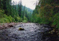 Photograph taken in  the Middle Santiam Wilderness