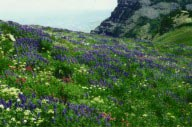 Photograph taken in  the Mount Timpanogos Wilderness