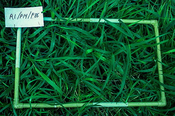 Grass after one month recovery